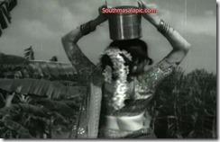Kanchana Hot 82