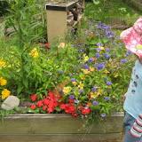 Сад для бабочек