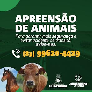 Abandono de equinos e bovinos em Guarabira - PB pode ser denunciado por telefone