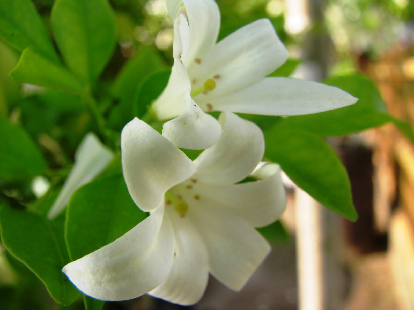 Yoyon Blog Berapa Nama Bunga Yang Anda Kenal 32 Jenis Bunga Dan