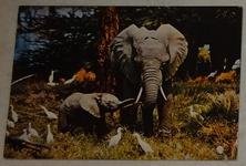 591 11-carte postale