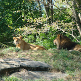Pittsburgh Zoo Revisited - DSC05110.JPG