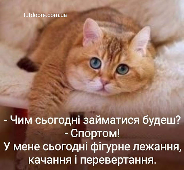смішні меми приколи з тваринами