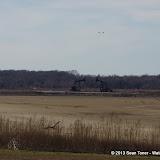 01-19-13 Hagerman Wildlife Preserve and Denison Dam - IMGP4067.JPG