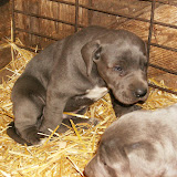 Star & True Blues February 21, 2008 Litter - HPIM1065.JPG