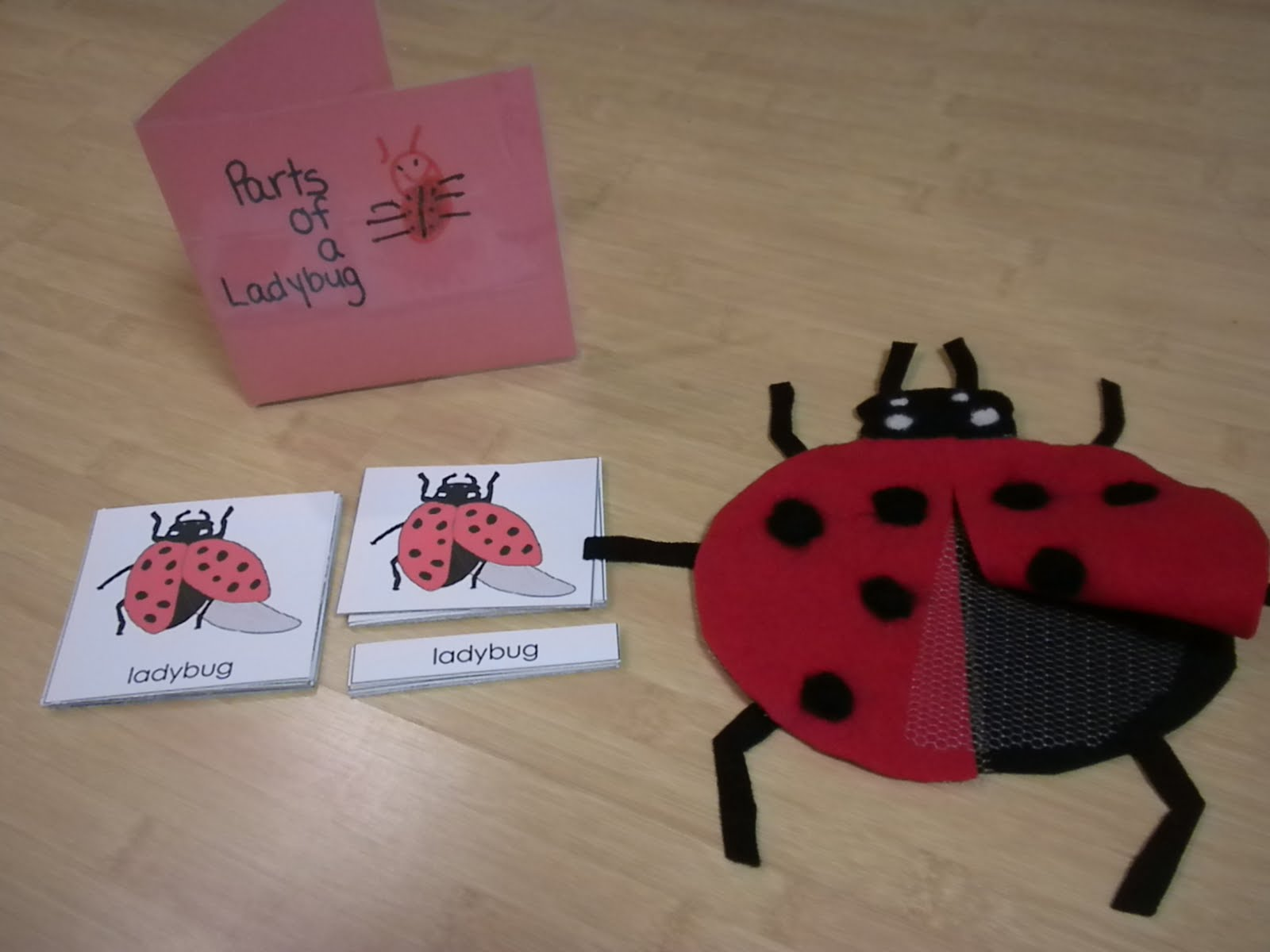 Parts of a Ladybug (Photo from Discovery Days and Montessori Moments)
