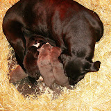 Star & True Blues February 21, 2008 Litter - HPIM0935.JPG