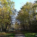 Forêt régionale de Gros Bois : allée Elisabeth