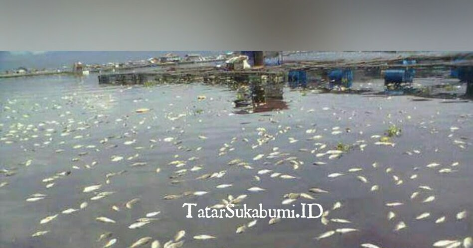 Waspada Musim Pancaroba, Ikan Di Cirata Gemprah - TATAR