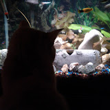 Fish - IMG_20121230_181935.jpg