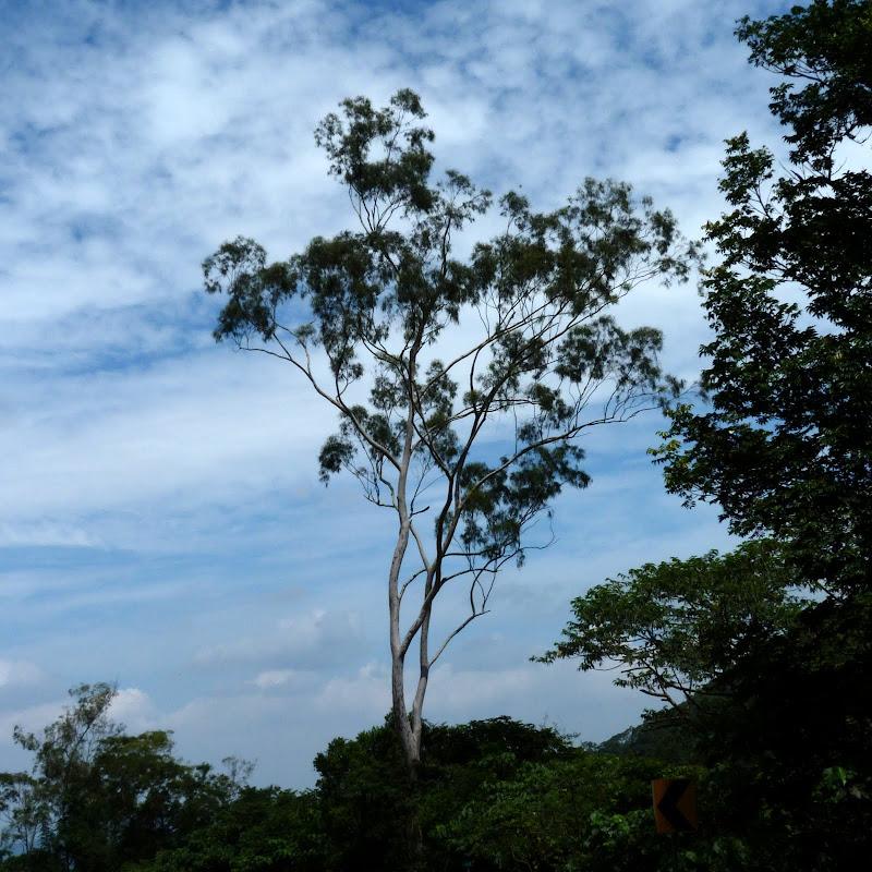 Puli  en passant , entre autres, par les villages de l ethnie Bunum de Loloko et Dili. J 10 - P1160826.JPG
