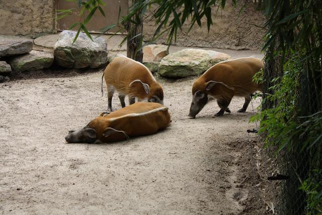 Zoo Snooze 2015 - IMG_7240.JPG