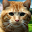 Videos For Your Cat's profile photo