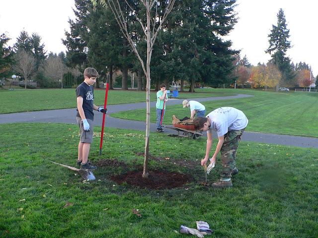 Tree Planting November 2010 - 110410%2B047.JPG