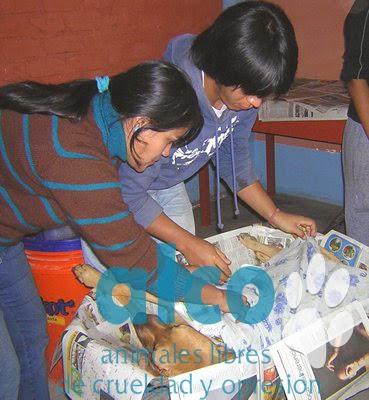 campaña esterilizacion VES 2008 (14)