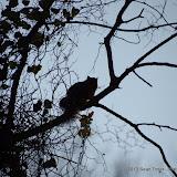 01-05-13 Arbor Hills Nature Preserve - IMGP3957.JPG