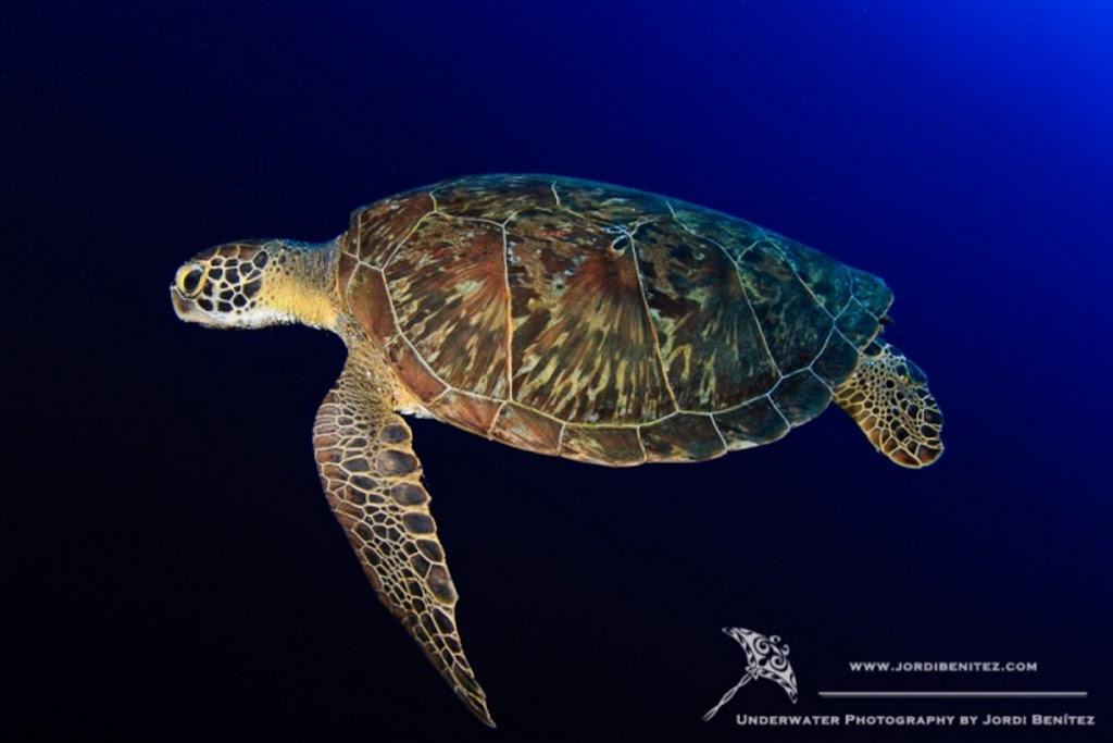 Bonaire: Tortuga