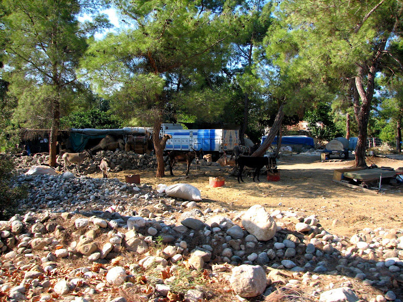 Wakacje w Turcji - img_6737.jpg