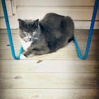 20120904-01-alexis-chair.jpg
