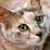 Shogo Iwano's profile photo