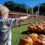 Pumpkin Patch 2014 - 116_4441.JPG