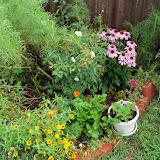Gardening 2010, Part Three - 101_4723.JPG