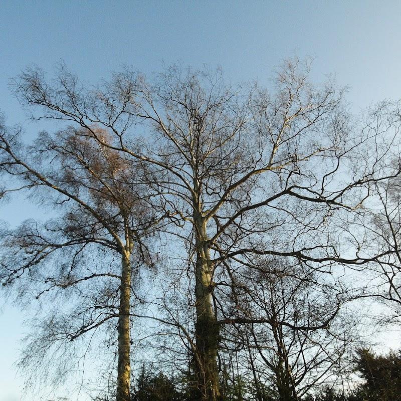 Stowe_Trees_23.JPG
