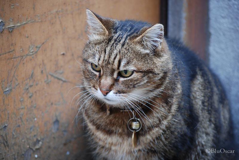 Gatti veneziani 06 02 2010 N 5