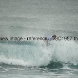 _DSC1957.thumb.jpg