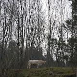 Sortida Castors i Llops a la Roca del Secut 2010 - DSC_0739.jpg