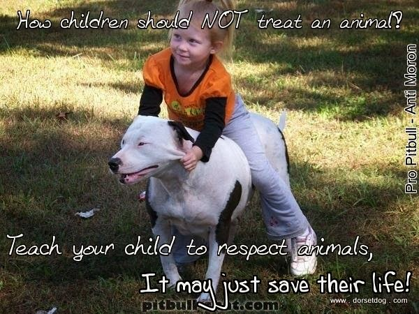 Child abusing a pitbull