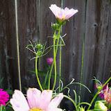Gardening 2012 - 115_2841.JPG
