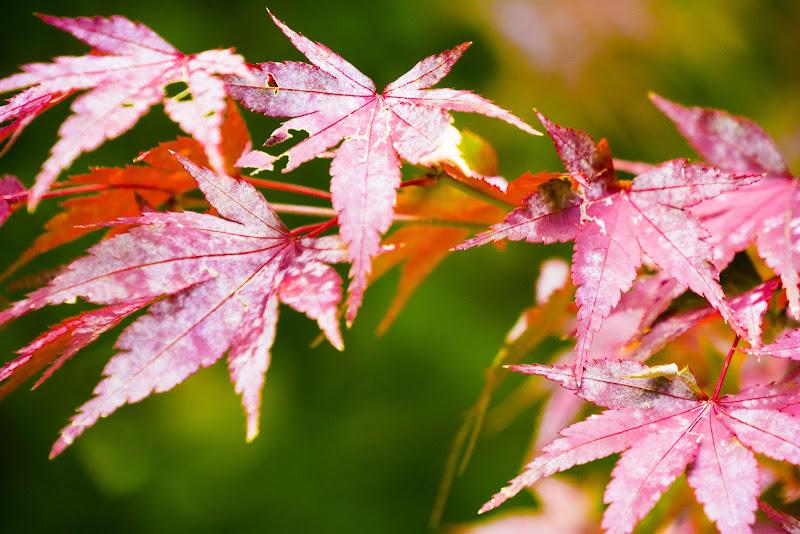 京都 紅葉 龍安寺 写真3