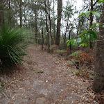 Walking along the ridge on the Mouat walk (228940)