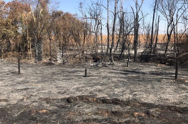 Pecuarista é multado em mais de R$ 105 mil por causar fogo em fazenda