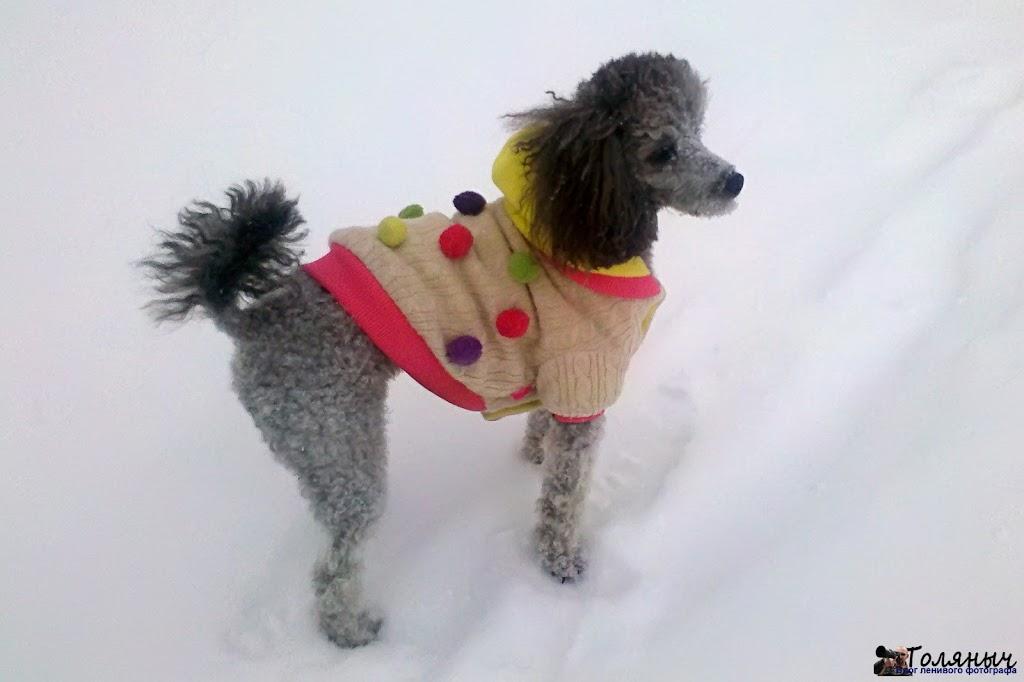 Мало того, что метет, так еще и достаточно холодно - у меня градусник показывал минус 7, так что собаку пришлось одевать.