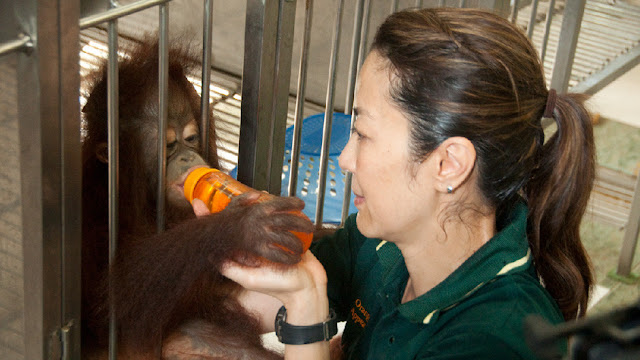 Michelle Yeoh and an orangutan
