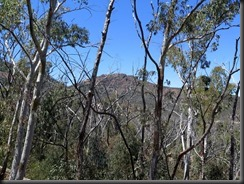 171107 079 Warrumbungles Whitegum Lookout