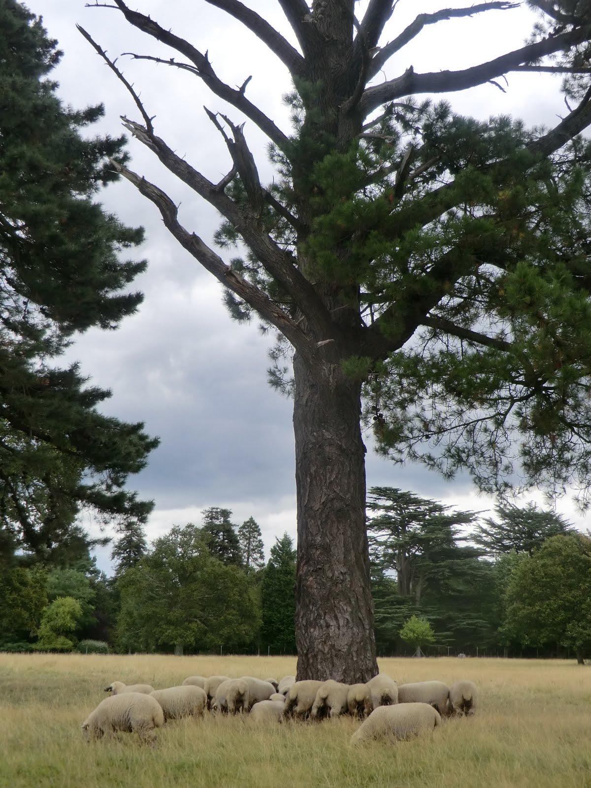 CIMG4268 Brockenhurst Park