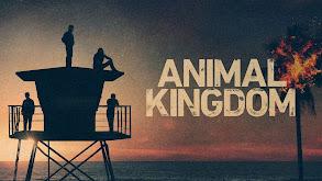Animal Kingdom thumbnail