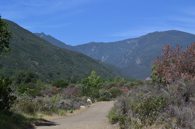 looking up the canyon toward peaks that will not be obtained today