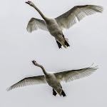 Acoso aéreo.jpg