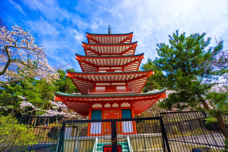 新倉富士浅間神社 桜 写真8