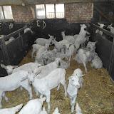 Bevers en Welpen- Lammetjes kijken - SAM_2362.JPG