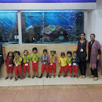 Field Trip to Aquarium by Nursery (2014-15) ,WIS and Witty World