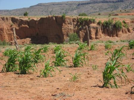 image of Southwestern dry farming