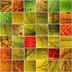 VEGETAL   Comme le monde végétal est riche et coloré !