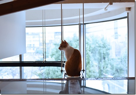 猫カフェ1