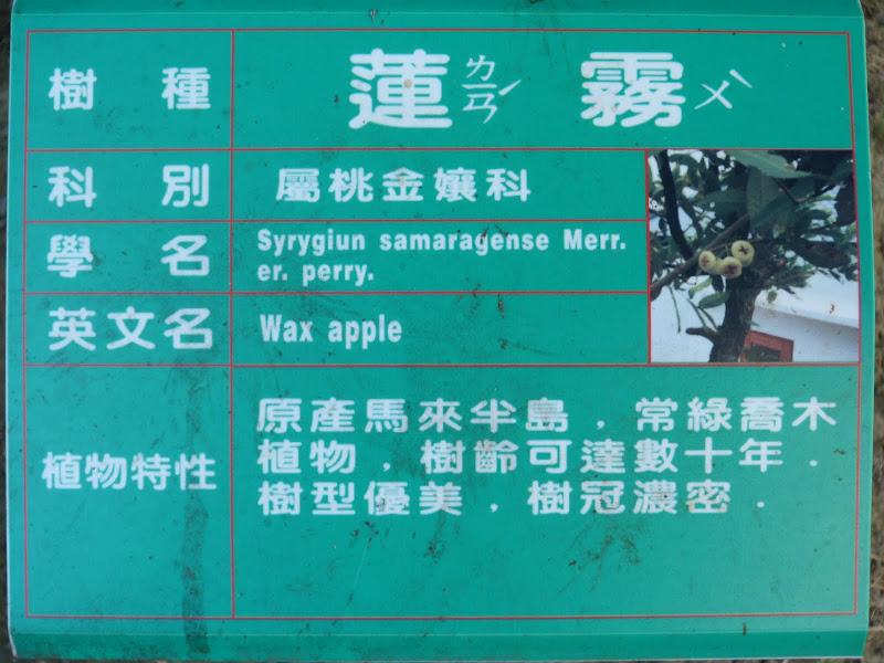 Tainan jour 7 - P1210358.JPG