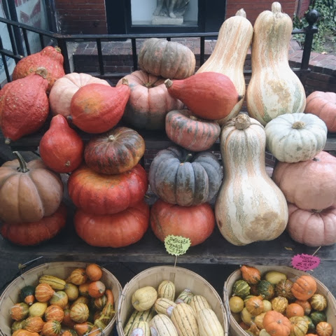 fall, pumpkins, halloween, harvest, thanksgiving